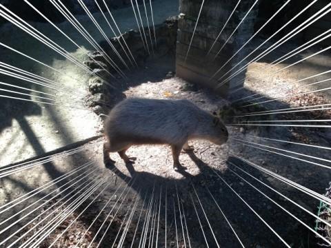 ネズミ界最大と言えばオレのことよ!